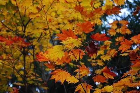 【やめてください】おしゃれの秋です!!