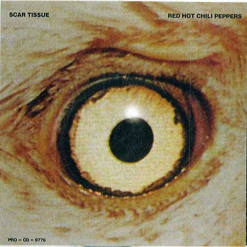 【今日の1曲】Red Hot Chili Peppers - Scar Tissue