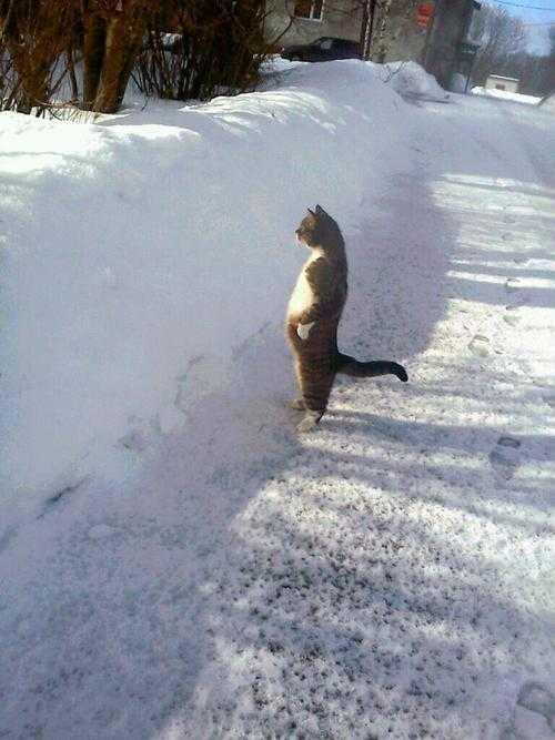 【画像】物凄く堂々と立つ猫