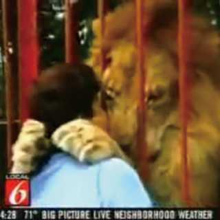 【感動】死にかけのライオンを看病した女性とライオンの再会