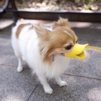 アヒル口になっちゃう犬用の口輪「quack」
