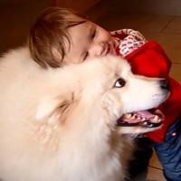 【動画】小さな女の子とモフモフの真っ白なサモエド犬の仲良し動画