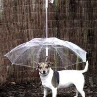まさに逆転の発想!犬用に考えられた傘「The Dogbrella」