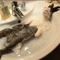 【動画】まるでおっさん!人間のようにお風呂に入るウサギ