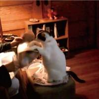 【動画】「新聞じゃなくてあたしを見て!」飼い主に猛アピールする猫