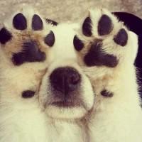 【小ネタ】犬を白クマに変身させる為の2ステップ