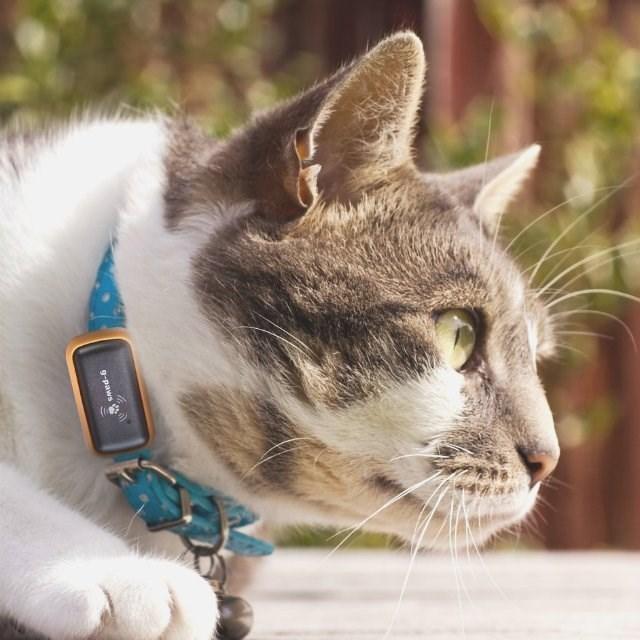 ペットのアクティビティを記録してGoogleMap上に表示させることができる「G-Paws」が面白い