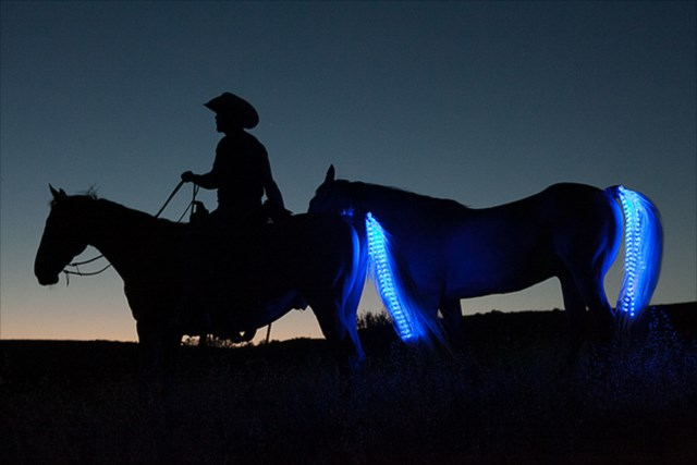 これぞ本当のテールランプだ!馬の尻尾につける夜間乗馬用ライト「Tail Lights」