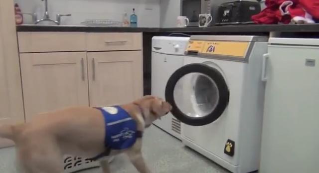 犬でも使える介護用の洗濯機「Woof to Wash」が凄い!「ワン」と鳴くと起動するよ!