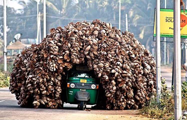 【小ネタ】とんでもない量のココナッツを運ぶバイク