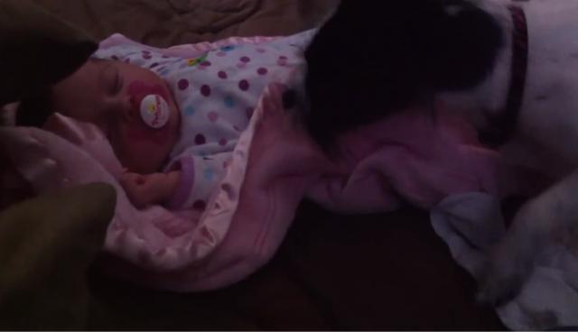 【動画】母性って凄いね!赤ちゃんに優しく布団を掛けてあげる犬