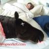 映画「ゴッドファーザー」の1シーンを再現した馬の頭型の枕「Horse Head Pillow」