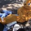 天王寺動物園の捕獲訓練でマレーグマが関節技を使ったと話題にw